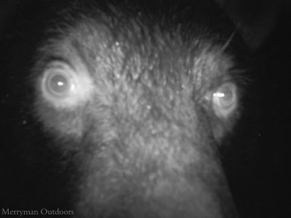 17 trail cam animals funny when humans arent around The strangest things show up on the trail cam (20 Photos)