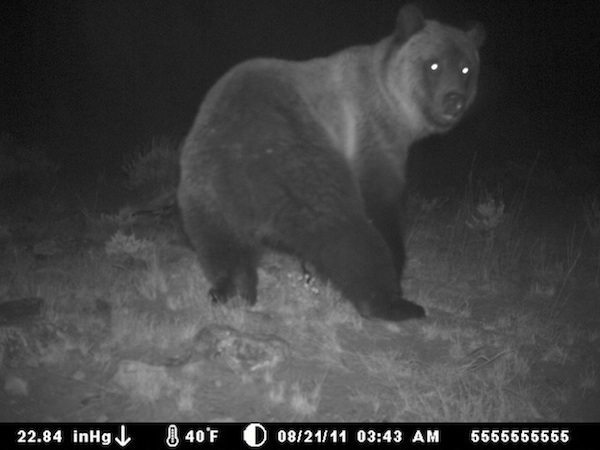 18 trail cam animals funny when humans arent around The strangest things show up on the trail cam (20 Photos)