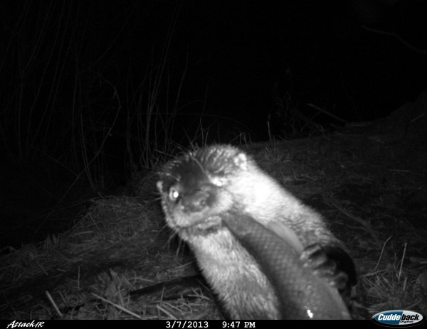 19 trail cam animals funny when humans arent around The strangest things show up on the trail cam (20 Photos)