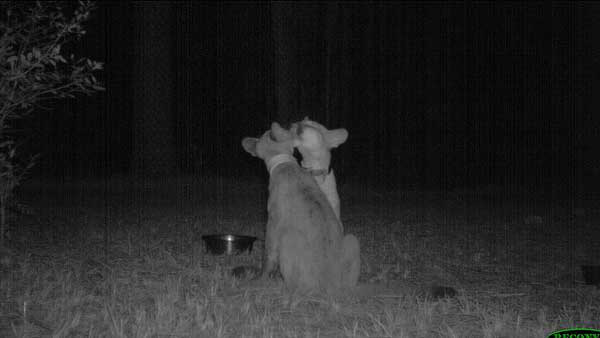 20 trail cam animals funny when humans arent around The strangest things show up on the trail cam (20 Photos)
