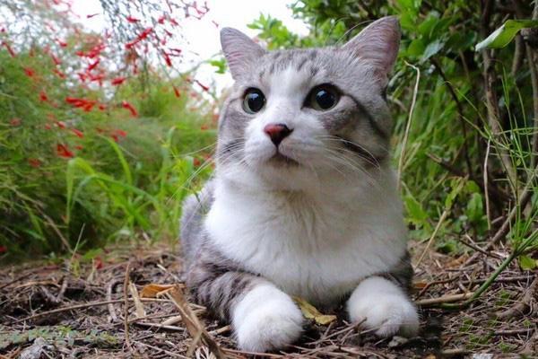 史上最疼老婆喵星人喵吉在老婆生產時的超溫柔舉動會讓你恨不得立刻變成貓嫁給他啊!