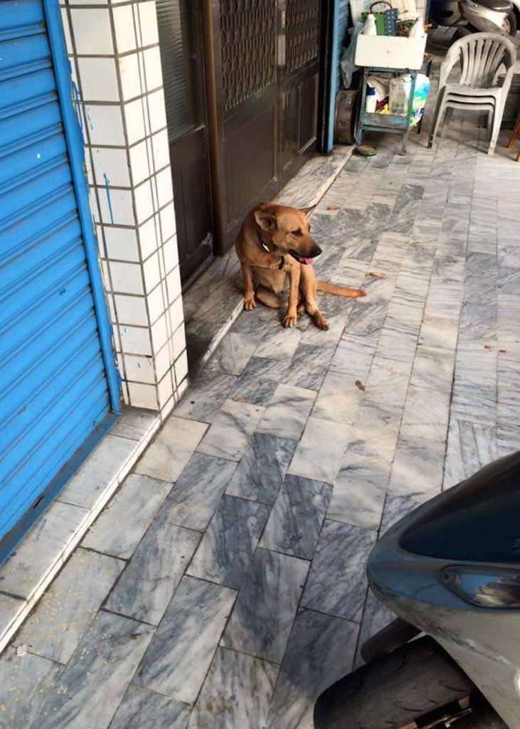 這隻流浪狗狗被可惡計程車輾過而倒在馬路上哀號,就在最危急的生死關頭時天使真的出現了...