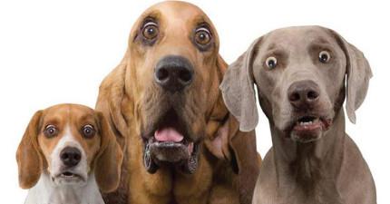愛狗人士聽到都立刻含淚跪下的超驚人發明!有了這個藥物以後狗狗就能陪我們一起慢慢變老了!