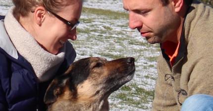 「我超愛親爸爸的,雖然他的臉粗粗的...」狗狗在世界上最後一天的催淚告白,最後那張讓我哭慘了...