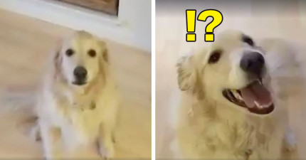 只要主人對這隻狗狗說出「去打掃乾淨」後,他馬上狂奔做出的事情會讓你想把他綁架回家養。