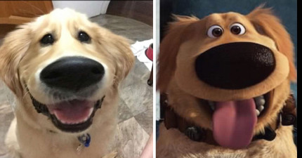 只要用這個濾鏡,你就可以把狗狗變成《天外奇蹟》裡的可愛狗狗小逗的「大鼻子動畫模樣」!