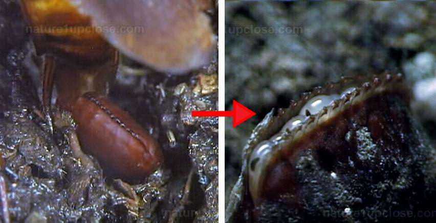 恐怖蟑螂蛋