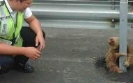 小樹懶想過馬路但無奈車速太快,嚇得抱緊他還以為是樹的護欄!他看到有人來救他時的萌樣讓人想要「抱緊處理」了!
