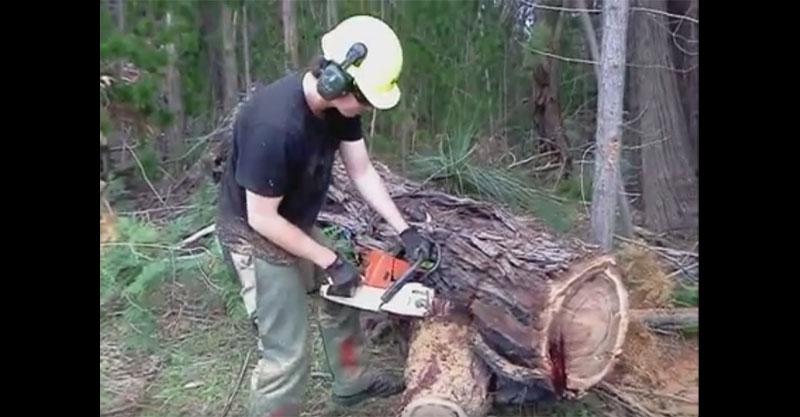 當他開始鋸這棵樹時,超恐怖畫面可能會讓你以後連紙都不敢用了!