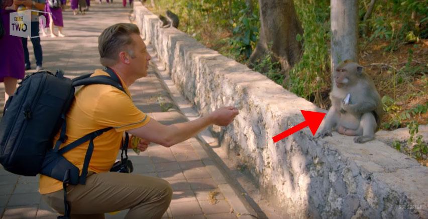 這個男子的手機被猴子偷走後,最後拿回手機的方式讓人驚覺猴子真的是最厲害的「奸商」...