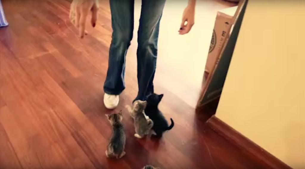這一群小貓鎖定了這位可憐的人類獵物後,用了「最殘忍的超萌酷刑」把她折磨到爆了!