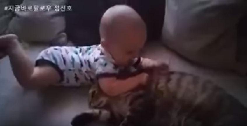 小寶寶一直用力抓貓咪的毛我還以為貓咪要發飆了,最後「貓咪忍無可忍做的溫柔舉動」會改變你對貓咪的看法!