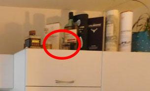 你有辦法在這張照片裡頭「找到一隻隱藏的貓咪」嗎?史上最難!