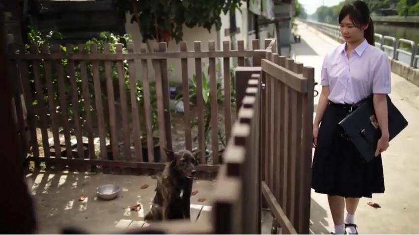 她每天上學路上都會被這隻亂叫的狗嚇到,但當「狗狗停止朝她狂吠」後她的人生就開始徹底改變了...