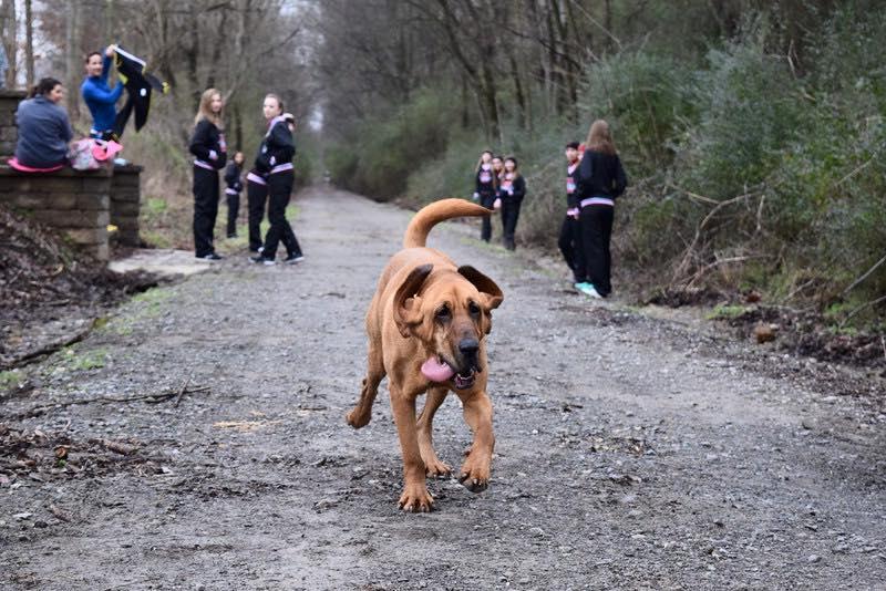 她把愛犬放出去尿尿卻發現狗狗不見蹤影,直到朋友打電話她才知道愛犬原來「意外還贏得了比賽」!