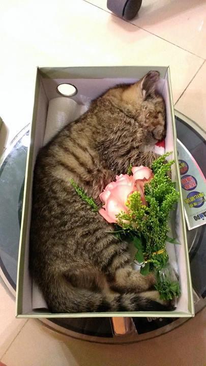 她在路上看到一隻被撞死的貓就把他擺到鞋盒裡PO上網,當網友得知接下來的發展後全都淚流滿面了。