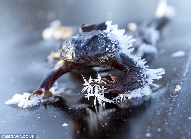 他在結冰湖面上溜冰覺得腳下怪怪der...一低頭「千萬雙眼睛緊盯」比恐怖片還驚悚