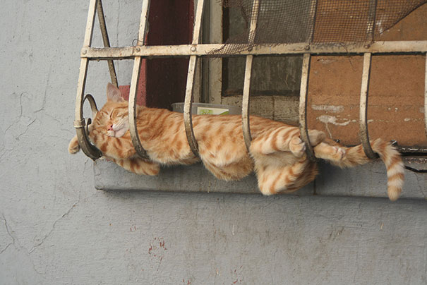 22隻「睡姿爆炸到會讓你今晚睡得更好」的睡到無法無天貓咪。