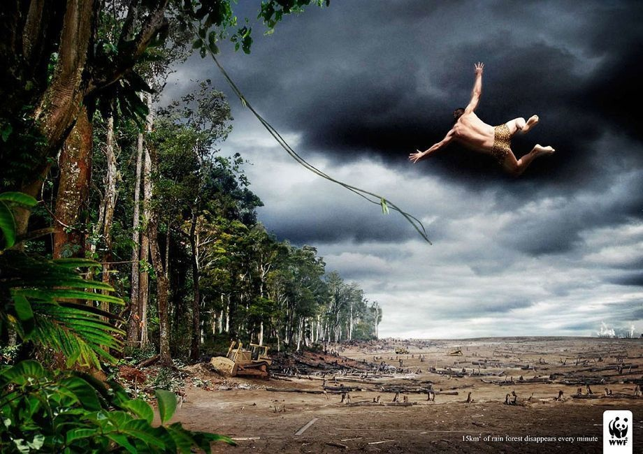 Even when we know the sad reality of diminishing rain forests, it's different when you see it.
