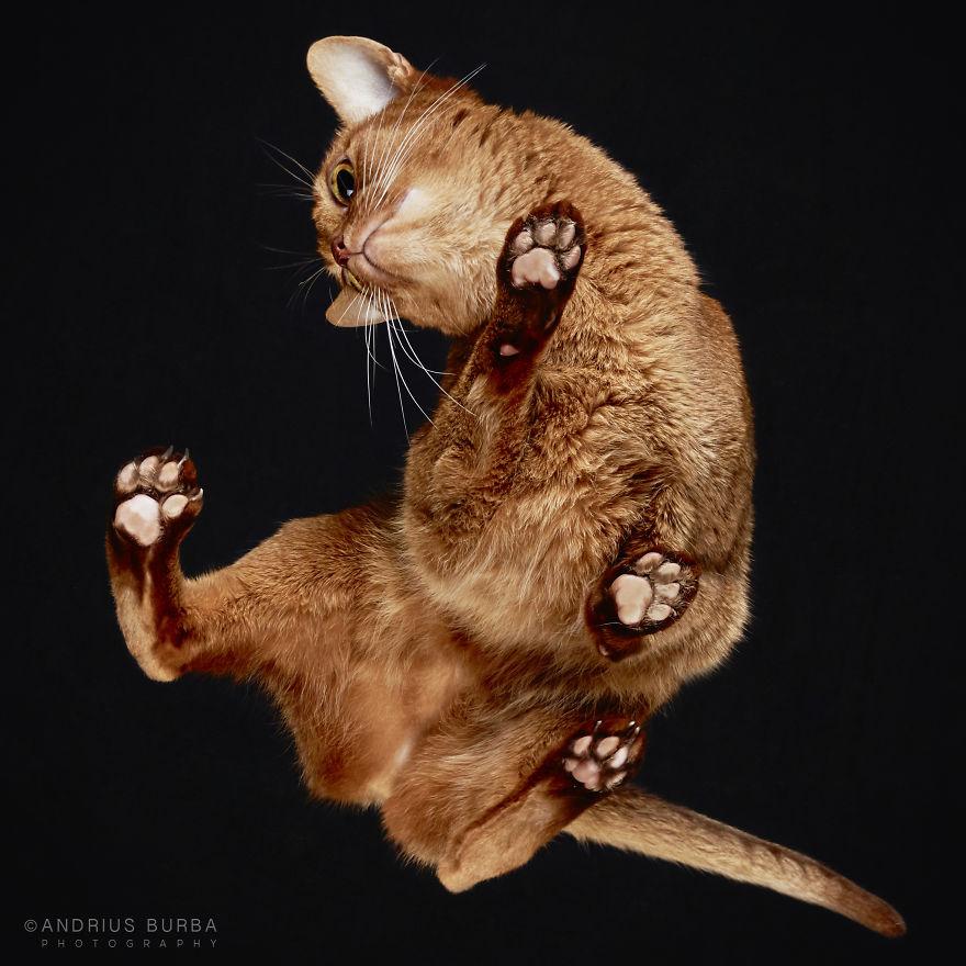 20張會萌到讓你融化成一攤血水的「超療癒貓咪肉球寫真」,#4我願意付錢拜託讓我摸一下啦!