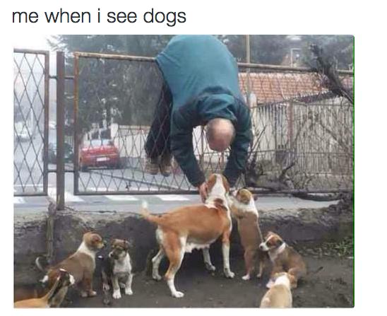 Having to pet every single dog: