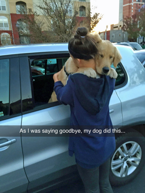 And the inseparable bond between human and dog: