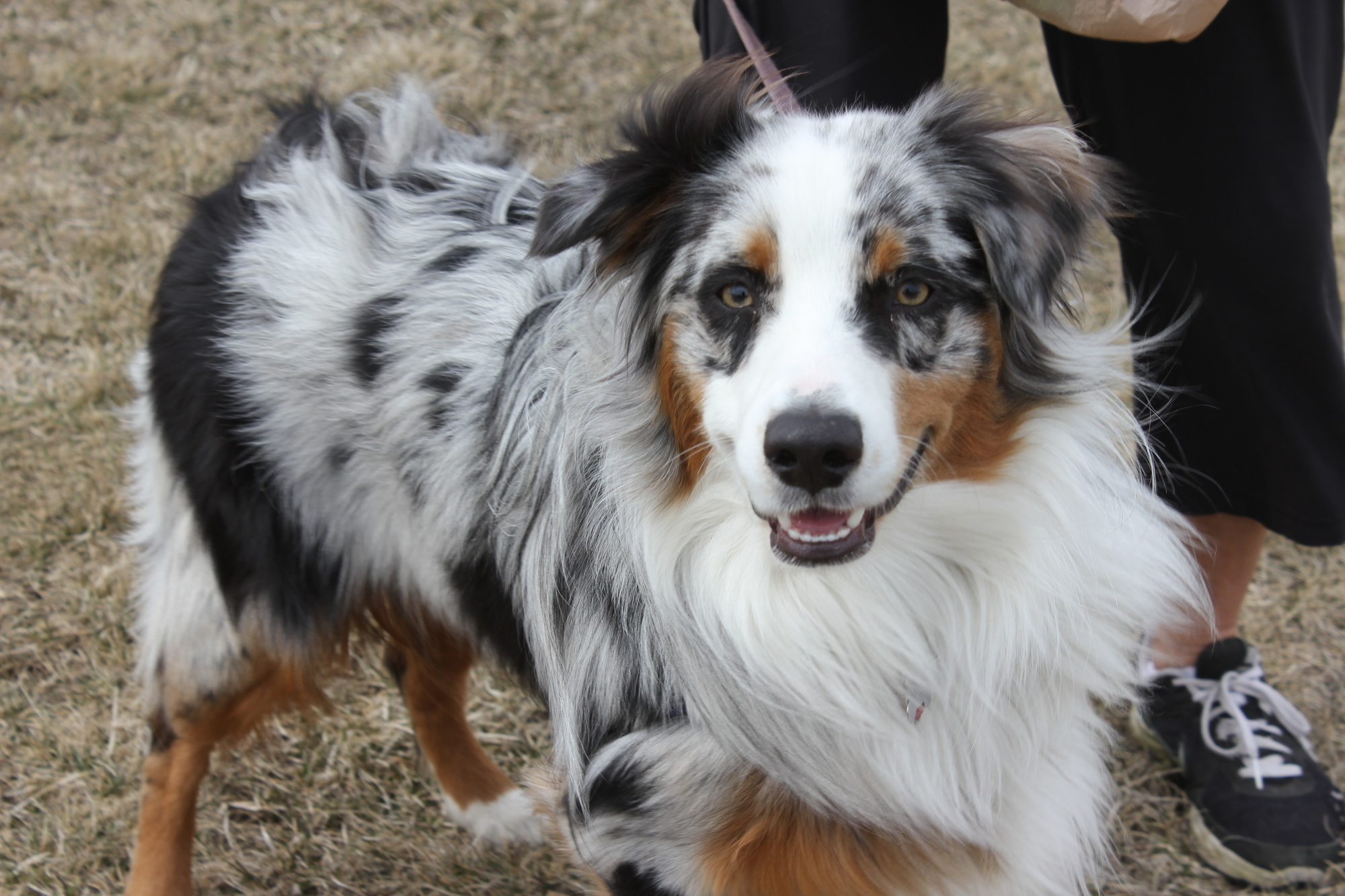 This majestic dog with spotted eyeliner eyes you'll always remember.
