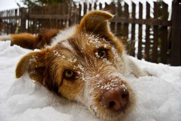 這位老爺爺給流浪狗食物後不久就去世,但狗狗接下來花了14年報恩做的事會讓你再也忍不住眼淚。
