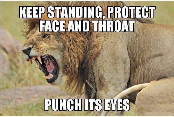 13種能讓你徒手打贏超兇猛野生動物的方法,#13會讓你嘴裡的飯噴出來!