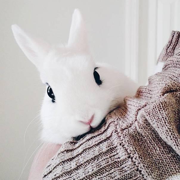這隻天生帶有濃密眼線的兔子被網友稱為「女神兔兔」,看到她鼻子動動的影片已經萌到讓人戀愛了!