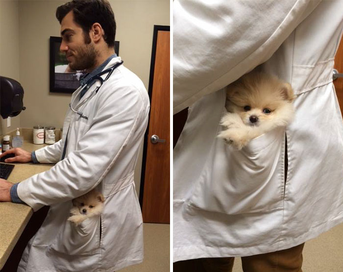 hottest-vet-pet-doctor-evan-antin-california-3191__700