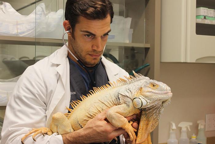 hottest-vet-pet-doctor-evan-antin-california-394__700