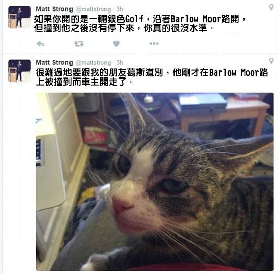 這名男性將被車撞死的愛貓埋葬在花園裡,沒想到數小時後「愛貓竟毫髮無傷返家」?!