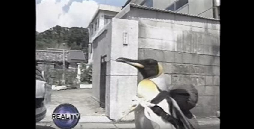 路人看到這隻背著背包的企鵝都覺得很奇怪,當看到他到底要去辦什麼重要事後我覺得應該要發身分證給他了!