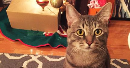 他們領養了可愛貓咪回家都沒想太多,但過幾天後才看到貓咪下半身的超怪異爆笑行為...