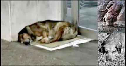 這隻狗狗自從主人在醫院死掉就一直守在門口,等過了12年後路人就看到了比「忠犬小八」還感人的景象!