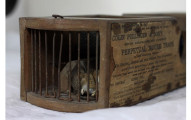 這位英國博物館員工一如往常在打掃有155年歷史的捕鼠器,結果一看裡面就看到了「證明輪迴的驚人畫面」!