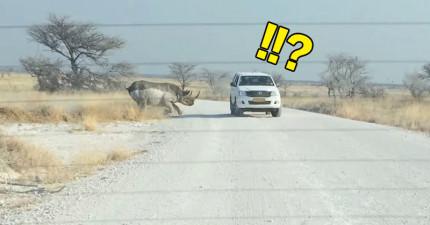 這隻2噸重的犀牛本來還在發呆,結果下一秒突然全力朝這台車暴衝的恐怖景象真的太爆炸驚悚了!