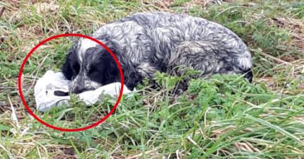 他路過發現這隻狗狗不斷舔舐塑膠袋以為她在吃東西,結果靠近一看才發現塑膠袋裡「最令人心碎的真相」!