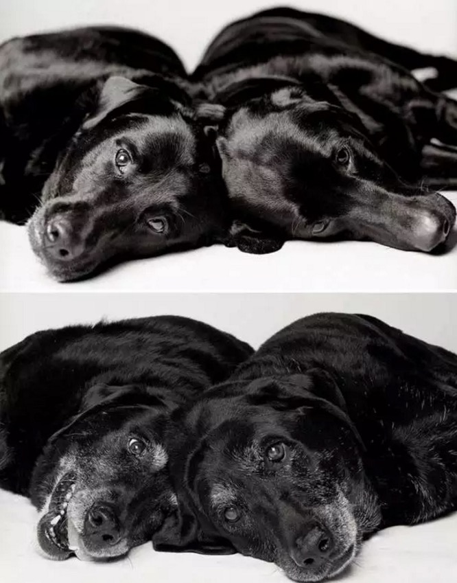 她拍下狗狗「小時候和現在長大的差異比對」,你看過後可能才會發現自己做錯了什麼!