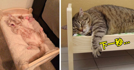 IKEA推出的這款「娃娃小床」已經變成貓奴必備的「貓床」!但這隻肥貓完全無視體重硬要躺結果釀成悲劇...