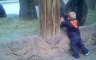 這名小男童在動物園看黑猩猩時,竟在籠子裡頭「意外找到失散多年的最佳玩伴」?!