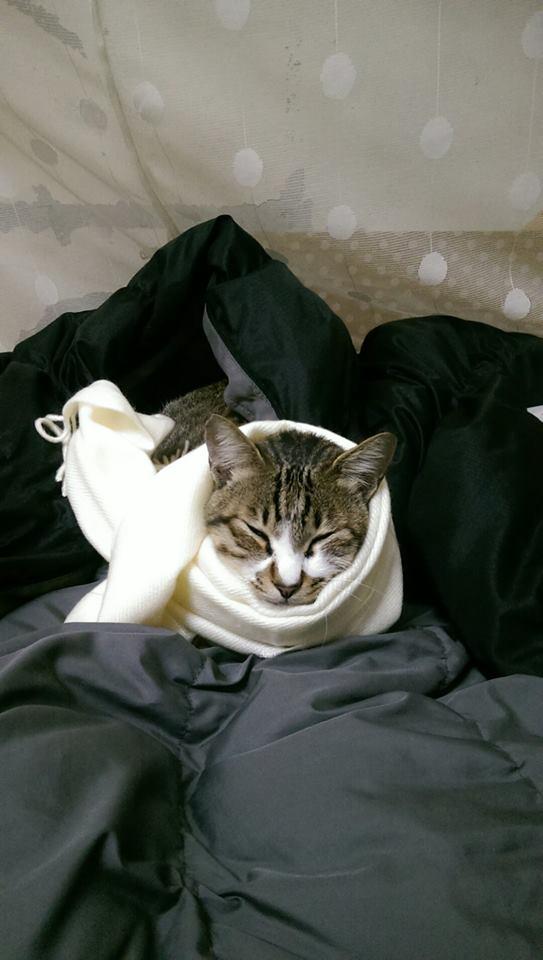 老媽好奇「貓咪都不吃飼料」!她看「誇張失誤」傻眼:難怪主子無奈