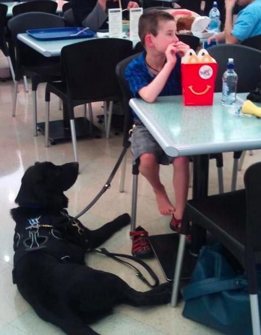 小男孩住院父母都要走了但家裡狗狗卻不肯離開,當他們發現超感人原因後都哭慘了!