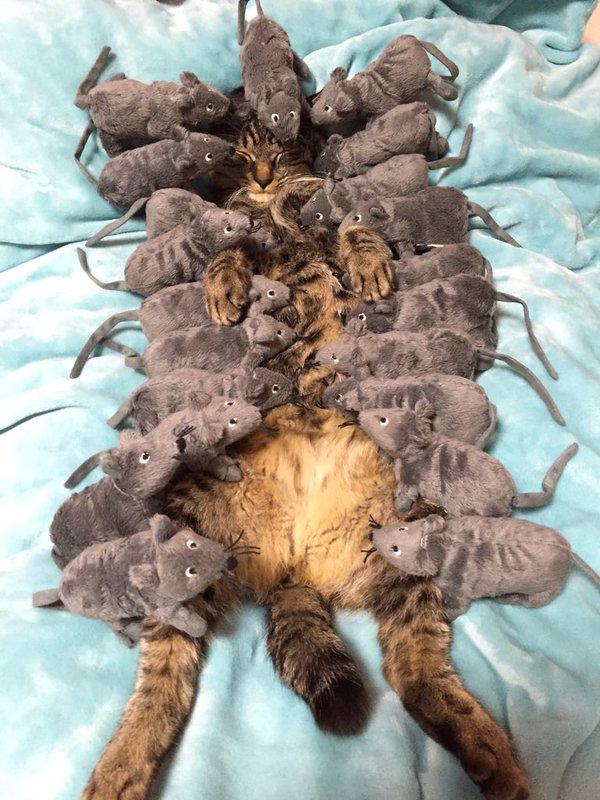 主人「放了一隻老鼠想叫醒貓咪」發現完全沒用之後,於是直接讓21隻把他給完全淹沒...畫面真的太爆萌了!