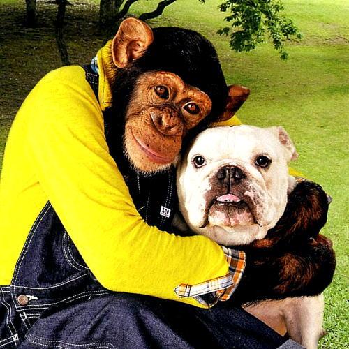 當年爆紅的《狗狗猩猩大冒險》的小龐生下超可愛的女兒!但當年的好夥伴詹姆士卻...