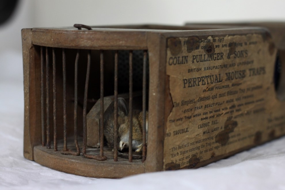 A freshly dead mouse has been found inside a mousetrap so old it is literally a museum exhibit.