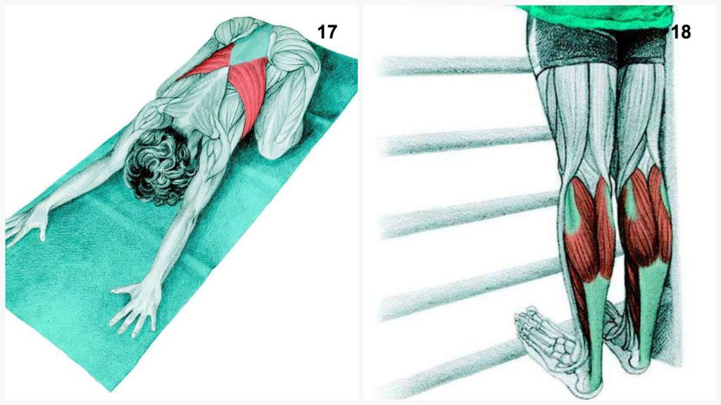 34張照片讓你看到你到底平常運動時用到哪些肌肉,不要再練錯了!
