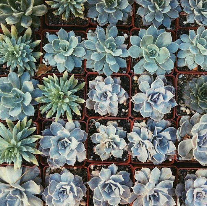 Organized succulents.