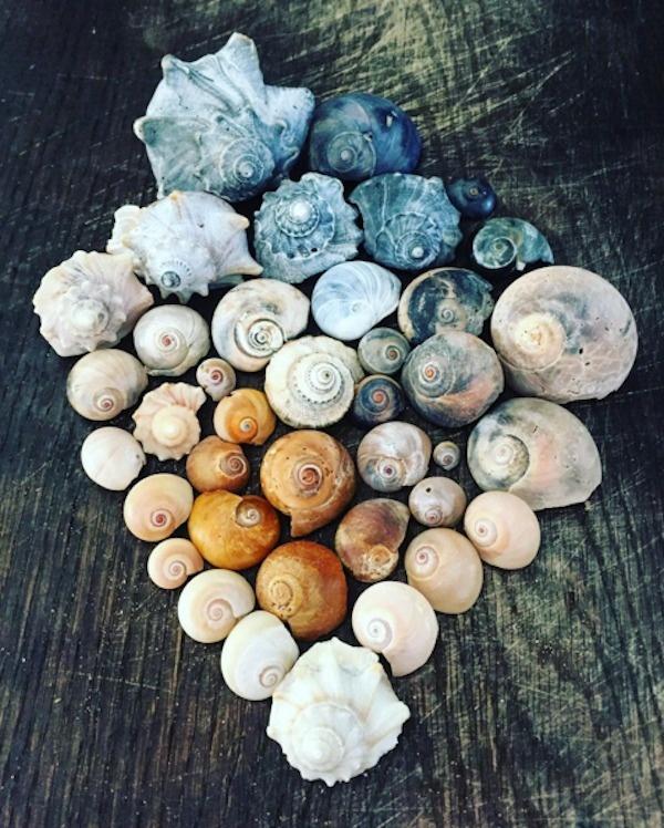 Beach color toned seashells.